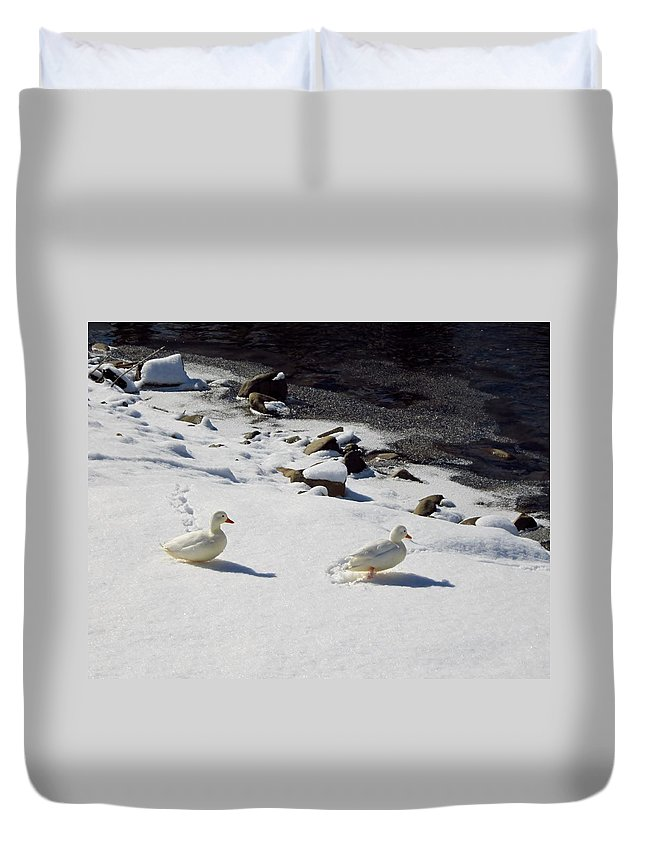 Ducks Duvet Cover featuring the photograph Snow Ducks by Cynthia Clark