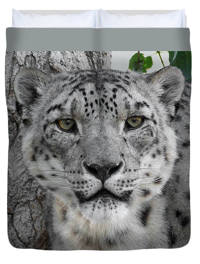 Animals Duvet Cover featuring the photograph Snow Leopard 5 by Ernie Echols