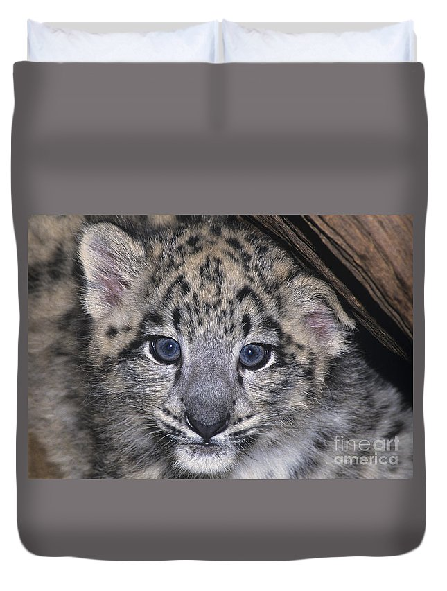 Asia Duvet Cover featuring the photograph Snow Leopard Cub Endangered by Dave Welling