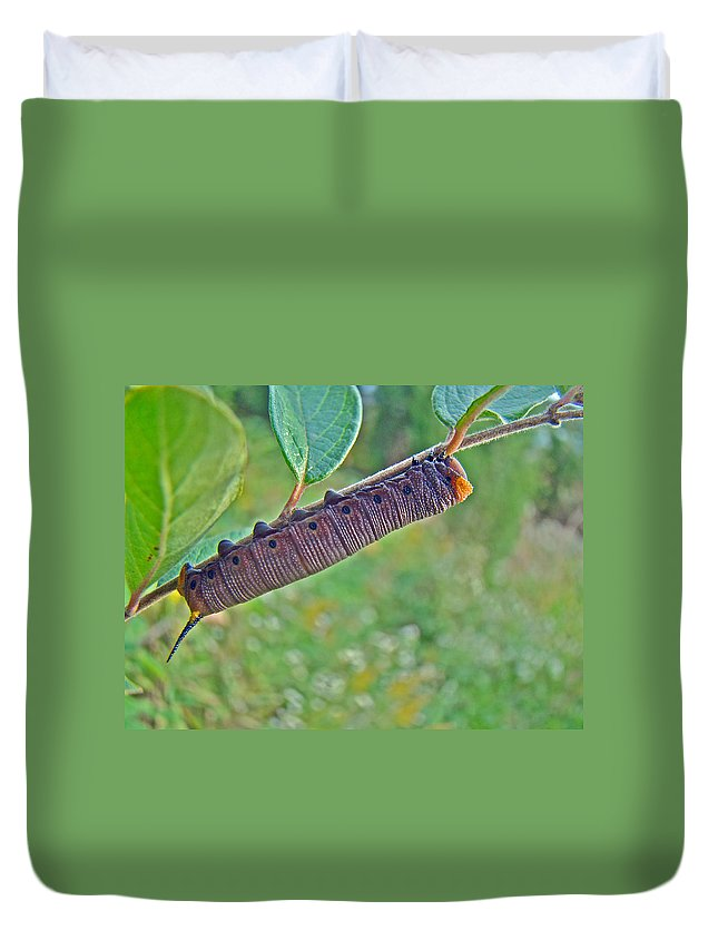 Caterpillar Duvet Cover featuring the photograph Snowberry Clearwing Hawk Moth Caterpillar - Hemaris Diffinis by Mother Nature