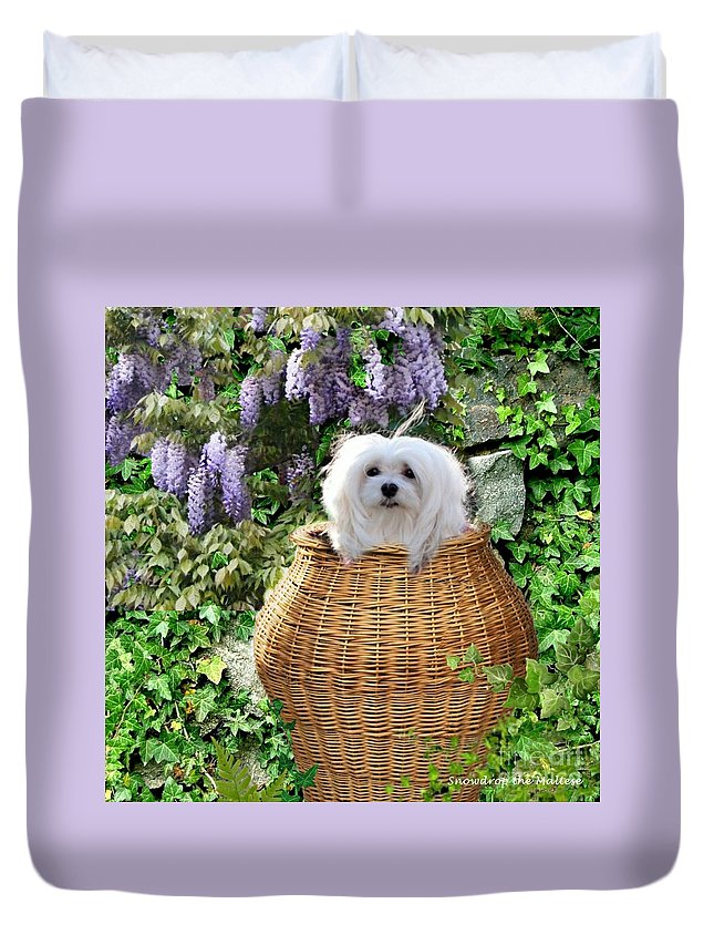 snowdrop The Maltese Duvet Cover featuring the mixed media Snowdrop In A Basket by Morag Bates