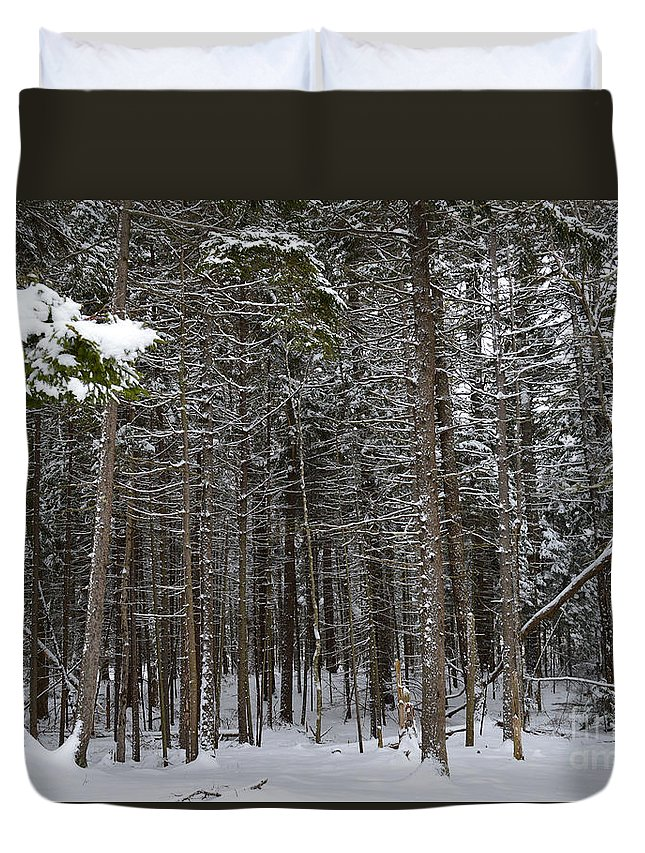 Forest Duvet Cover featuring the photograph Snowy Forest In Acadia by Meandering Photography