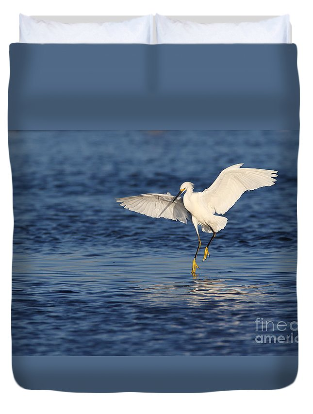 Snowy Egret Duvet Cover featuring the photograph Snowy Landing by Bryan Keil