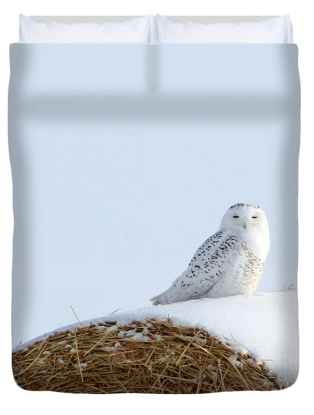 Alyce Taylor Duvet Cover featuring the photograph Snowy Owl by Alyce Taylor