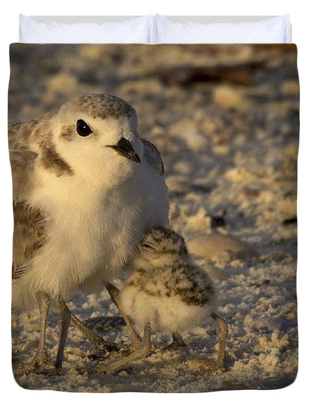 Snowy Plover Duvet Cover featuring the photograph Snowy Plover Transforms Into A Spiderbird 5 by Meg Rousher