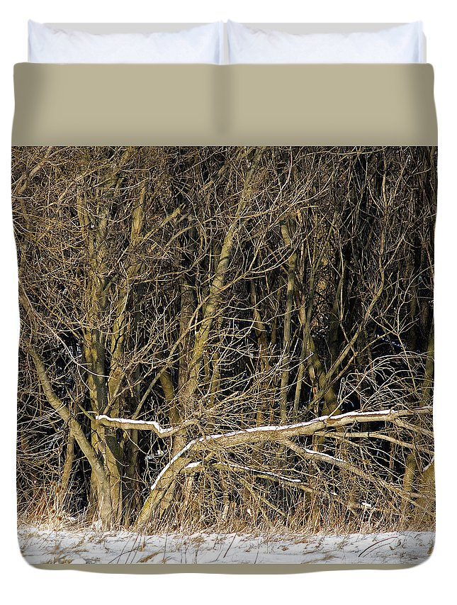 Winter Snow Trees Forest Branches Duvet Cover featuring the photograph Snowy Winter Forest by Tracy Shrader