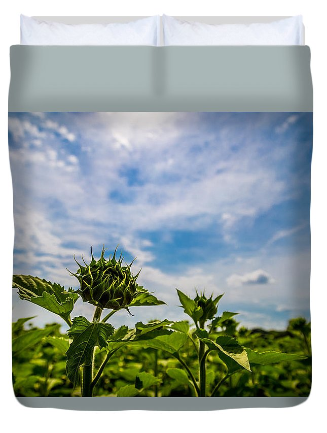 Sun Duvet Cover featuring the photograph Soaking In The Sun by Todd Reese