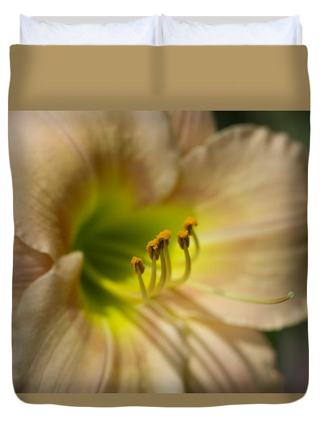 Hemerocallis Duvet Cover featuring the photograph Soft As A Peach Daylily by Kathy Clark