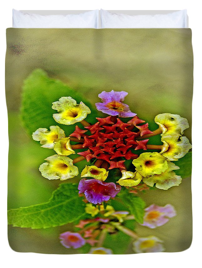 Pictures Of Flowers Duvet Cover featuring the photograph Soft Floral Duvet Cover by Skip Willits