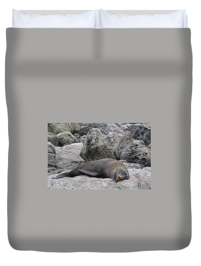 Soft Life Seal Duvet Cover featuring the photograph Soft Life Seal by Dreamland Media