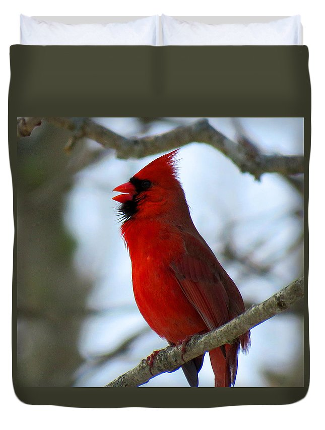 Cardinal Duvet Cover featuring the photograph Songs Of Spring by Dianne Cowen