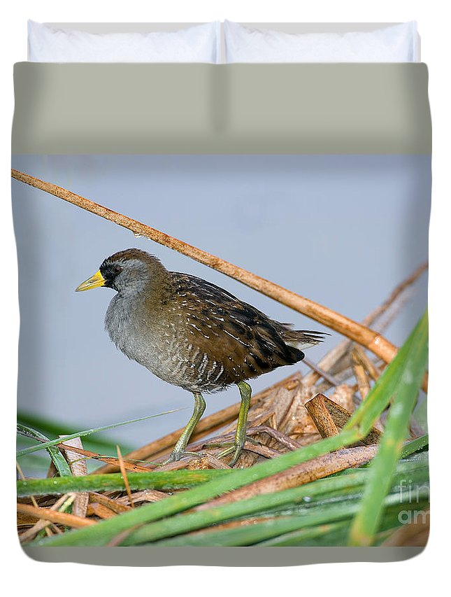 Animal Duvet Cover featuring the photograph Sora Rail by Anthony Mercieca