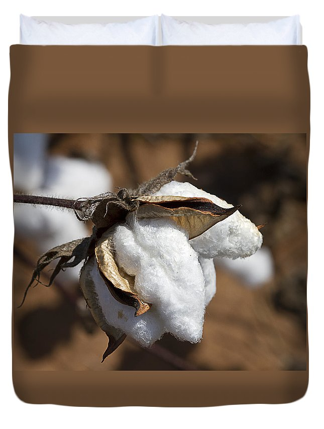 Cotton Duvet Cover featuring the photograph Southern Cotton by Kathy Clark