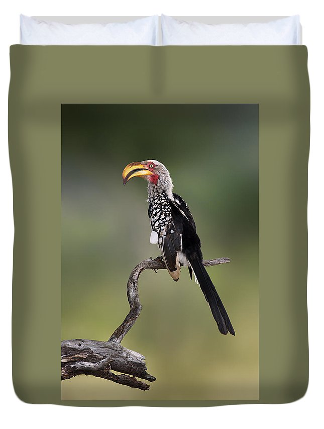 Animal Duvet Cover featuring the photograph Southern Yellowbilled Hornbill by Johan Swanepoel