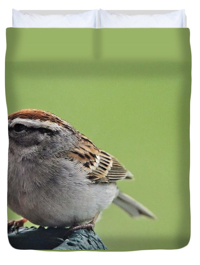Sparrow Snack Duvet Cover featuring the photograph Sparrow Snack by Dan Sproul