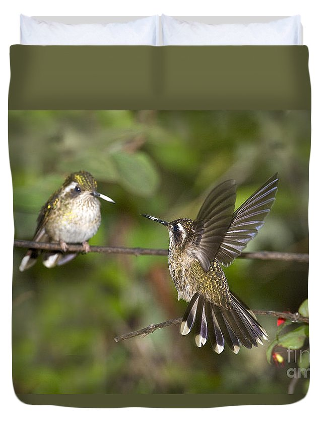 Animal Duvet Cover featuring the photograph Speckled Hummingbirds by Anthony Mercieca