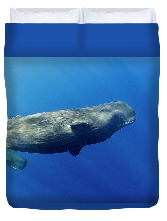 Underwater Duvet Cover featuring the photograph Sperm Whale Pyseter Macrocephalus by Stephen Frink