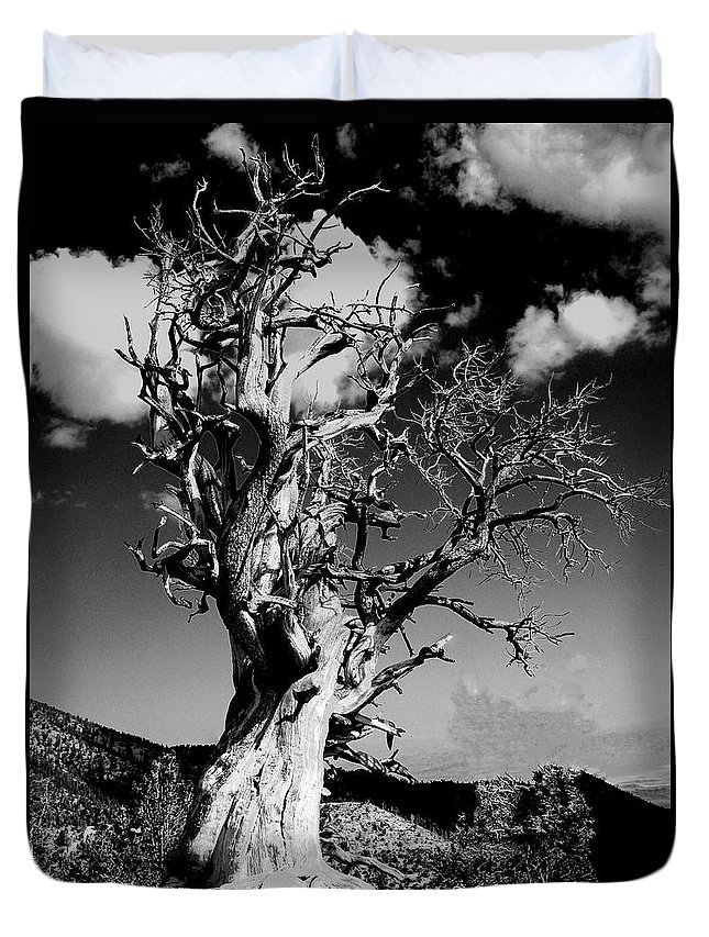 Spooky Duvet Cover featuring the photograph Spooky Tree by Alan Socolik