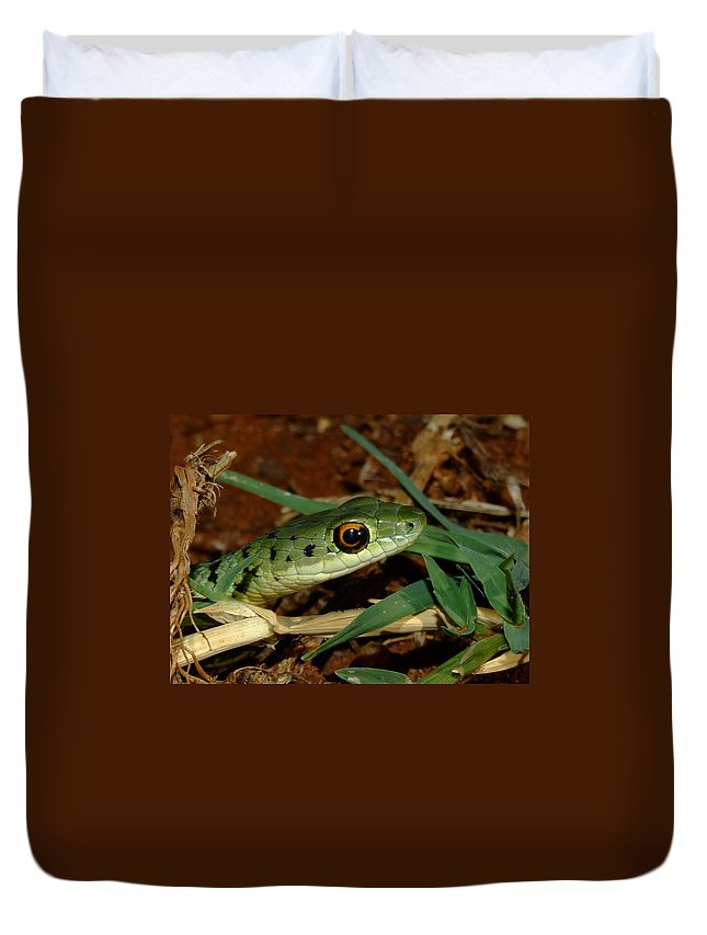 Snake Duvet Cover featuring the photograph Spotted Bush Snake Philothamnus Semivariegatus by Tracey Beer
