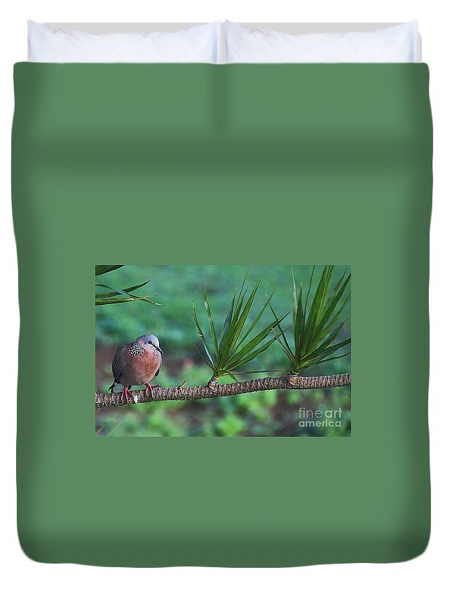 Spotted Dove Duvet Cover featuring the photograph Spotted Dove by Elizabeth Winter