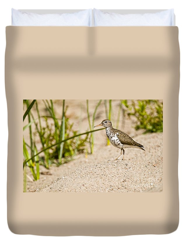 Spotted Sandpiper Duvet Cover featuring the photograph Spotted Sandpiper Pictures 45 by World Wildlife Photography