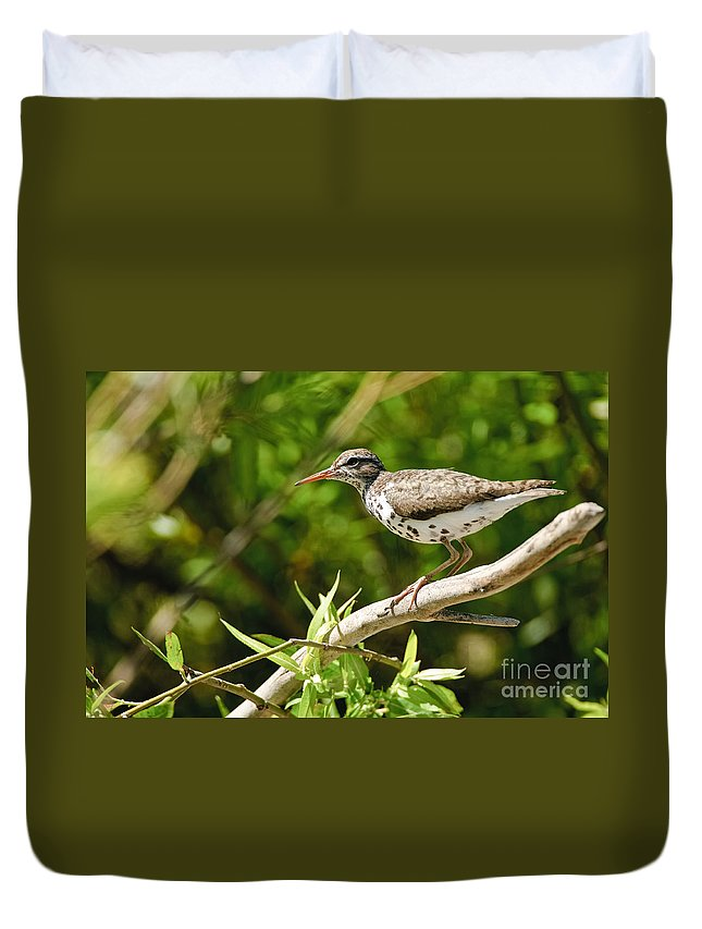 Spotted Sandpiper Duvet Cover featuring the photograph Spotted Sandpiper Pictures 48 by World Wildlife Photography