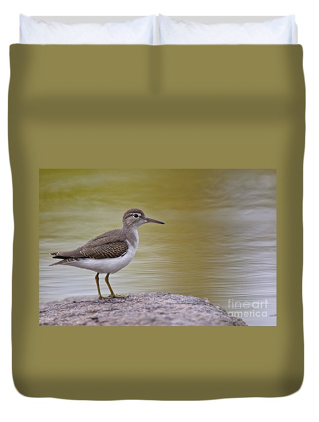 Spotted Sandpiper Duvet Cover featuring the photograph Spotted Sandpiper Pictures 51 by World Wildlife Photography
