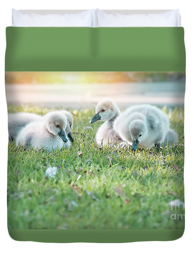 Babies Duvet Cover featuring the photograph Spring Babies by Kym Clarke