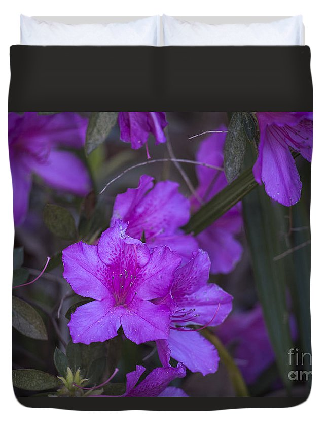 Spring Duvet Cover featuring the photograph Spring Blooms by Dale Powell