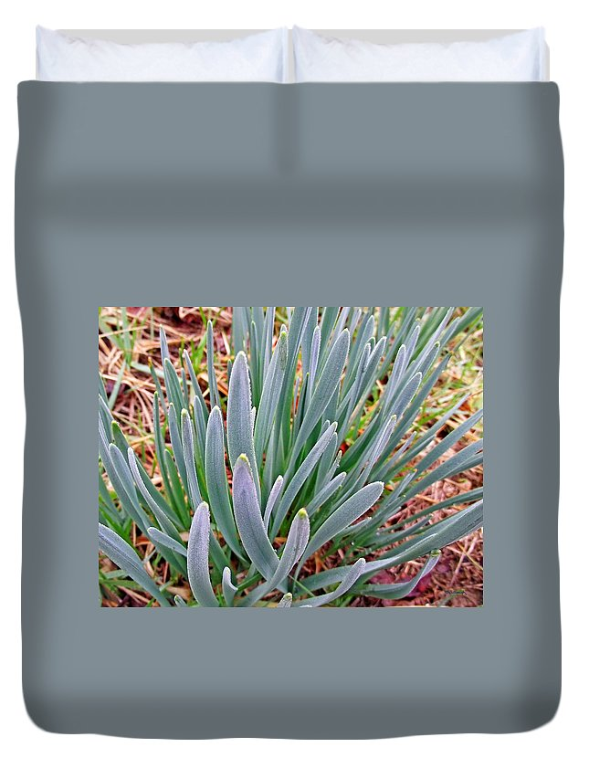 Plants Duvet Cover featuring the photograph Spring Daffodil Plant by Duane McCullough