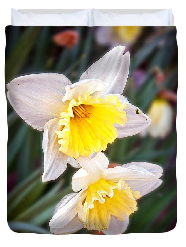 Floral Duvet Cover featuring the photograph Spring Daffodils by Mikki Cucuzzo