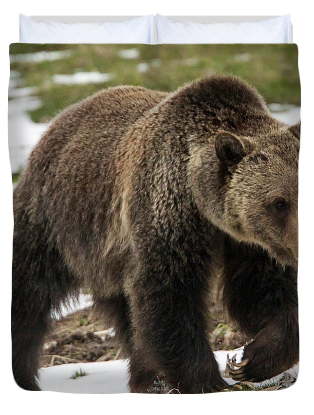 Grizzly Bear Duvet Cover featuring the photograph Spring Grizzly Bear by Jack Bell