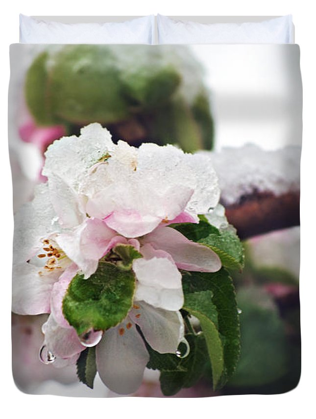 Apple Blossoms Duvet Cover featuring the photograph Spring Snow On Apple Blossoms by Lisa Knechtel