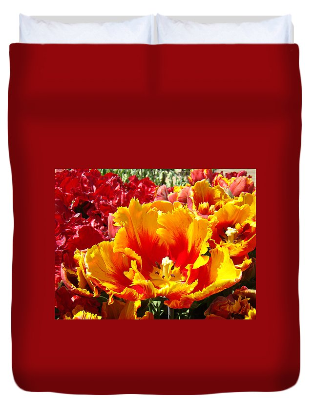 Yellow Duvet Cover featuring the photograph Spring Tulip Flowers Art Prints Yellow Red Tulip by Baslee Troutman