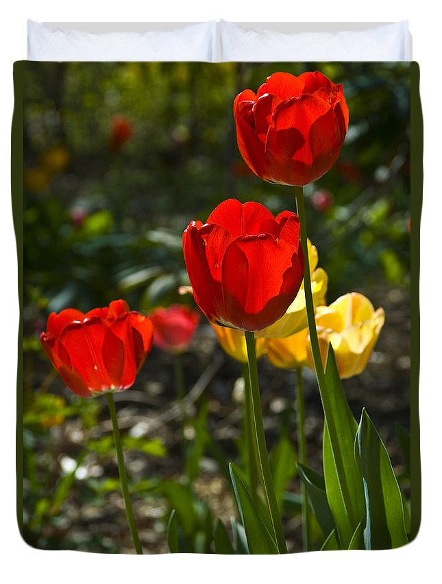 Flower Duvet Cover featuring the photograph Spring Tulips by Anthony Sacco