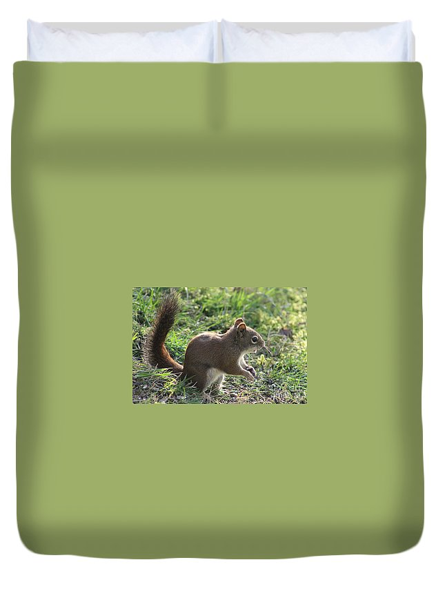 Squirrel Duvet Cover featuring the photograph Squirrel And His Sunflower Seed by Leone Lund