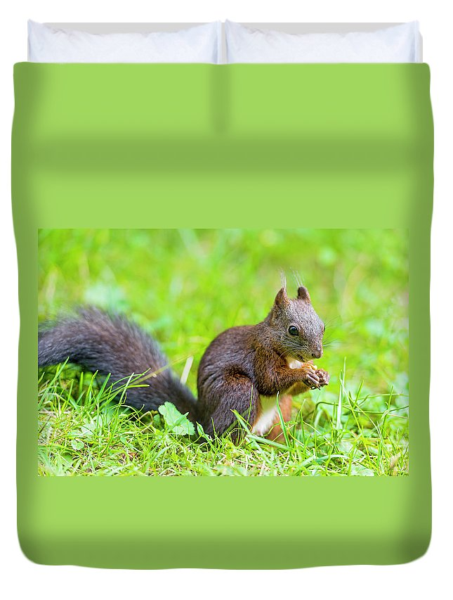 Nut Duvet Cover featuring the photograph Squirrel Eating A Nut In The Grass by Picture By Tambako The Jaguar