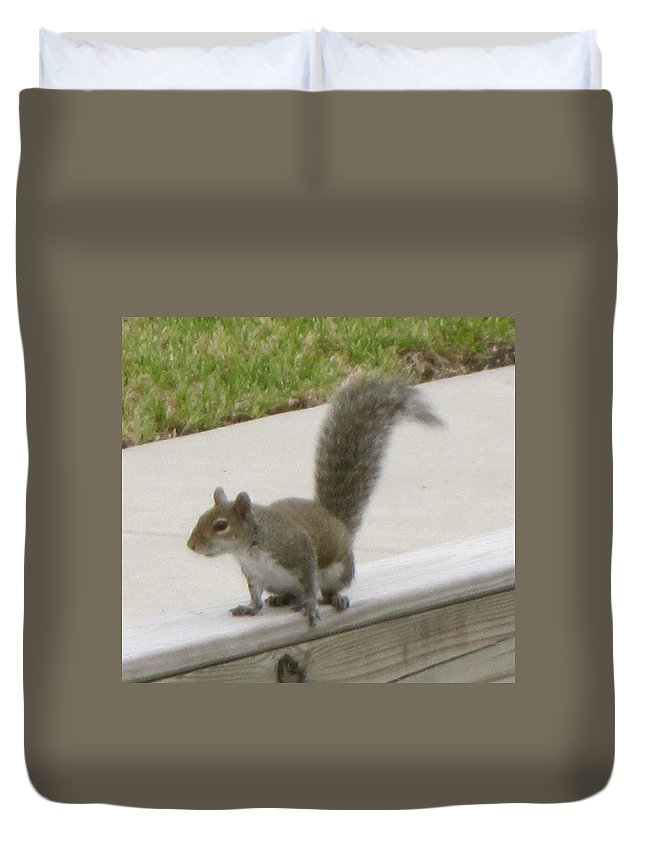 Squirrel Duvet Cover featuring the photograph Squirrel by Janet K Wilcox