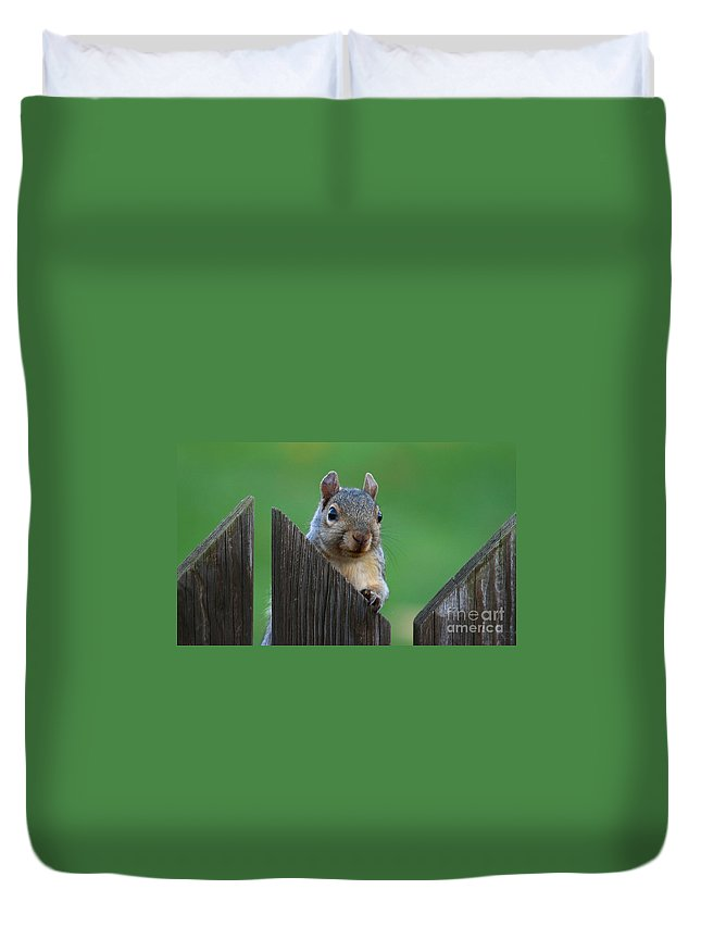 Squirrel Duvet Cover featuring the photograph Squirrel Playing Peek A Boo by Ken Keener