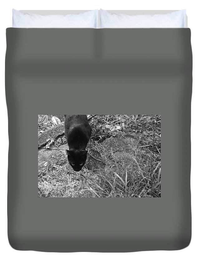 Black Cat Duvet Cover featuring the photograph Stalking Cat by Melinda Fawver