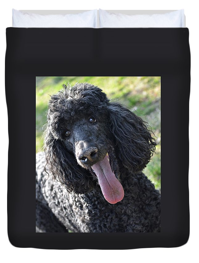 Standard Poodle Duvet Cover featuring the photograph Standard Poodle by Lisa Phillips