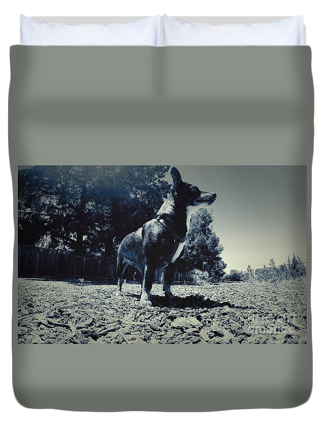 Dog Duvet Cover featuring the photograph Standing Tall by Chris Phillips