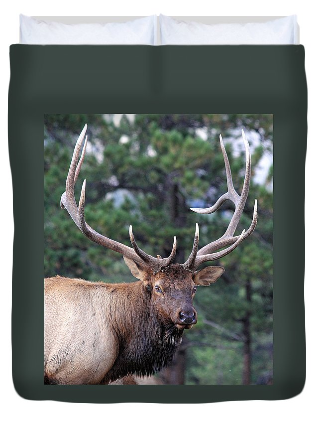 Elk Duvet Cover featuring the photograph Stare Down by Shane Bechler