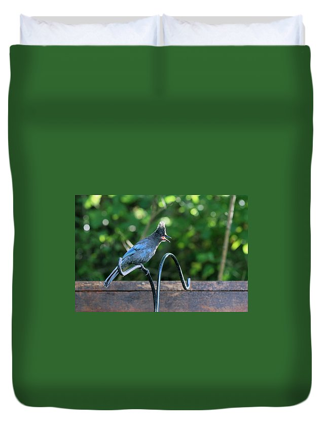 Jay Duvet Cover featuring the photograph Steller's Jay by Paul Fell