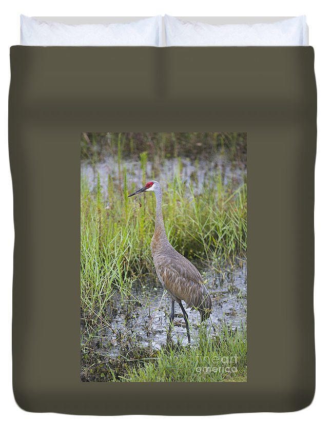 Sandhill Crane Duvet Cover featuring the photograph Stoic Sandhill by Carol Groenen