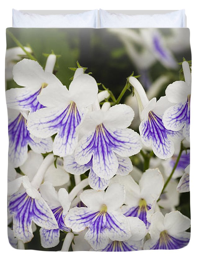 Streptocarpus Duvet Cover featuring the photograph Streptocarpus by Maj Seda