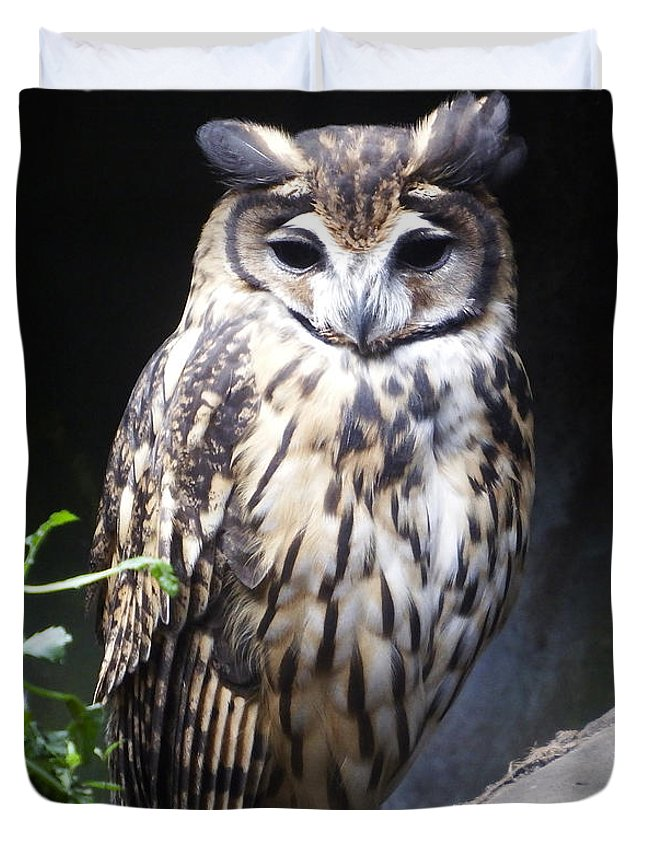Owl Duvet Cover featuring the photograph Striped Owl by Kurt Van Wagner