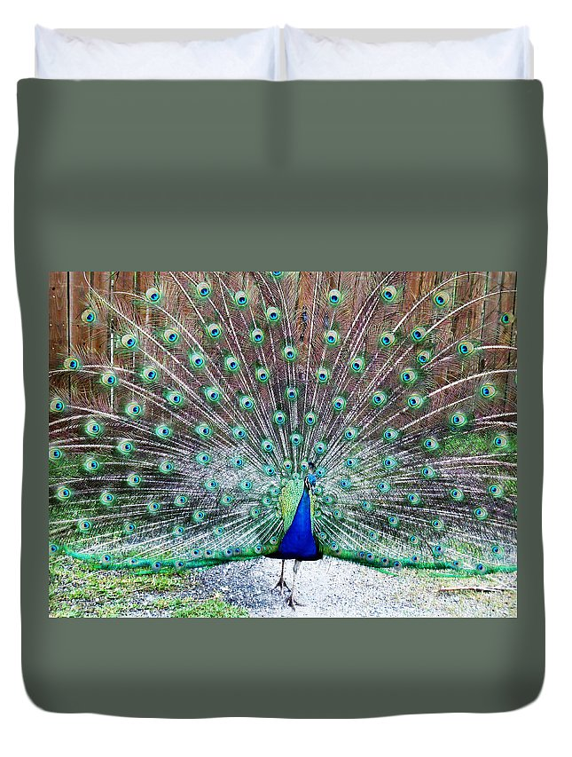 Peacock Duvet Cover featuring the photograph Strutting by Sheryl Chapman Photography