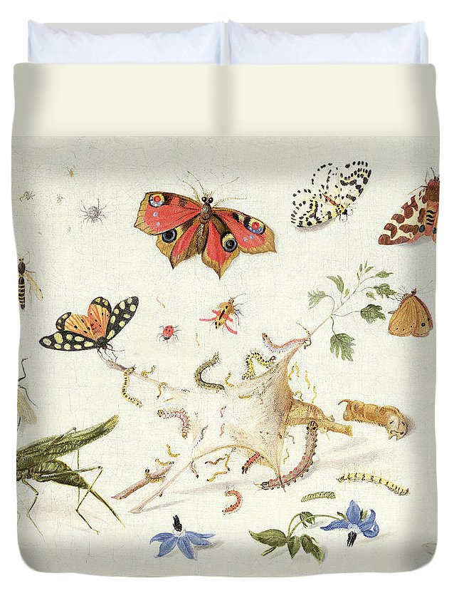 Insect Duvet Cover featuring the painting Study Of Insects And Flowers by Ferdinand van Kessel