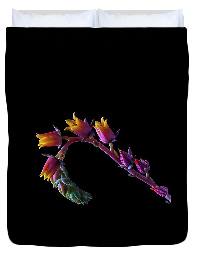 California Duvet Cover featuring the photograph Succulent Flowers On A Stalk by Bill Gracey
